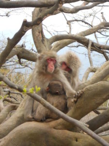 monkeys arashiyama park family